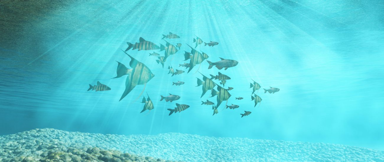 3D render of an underwater background with shoal of fish
